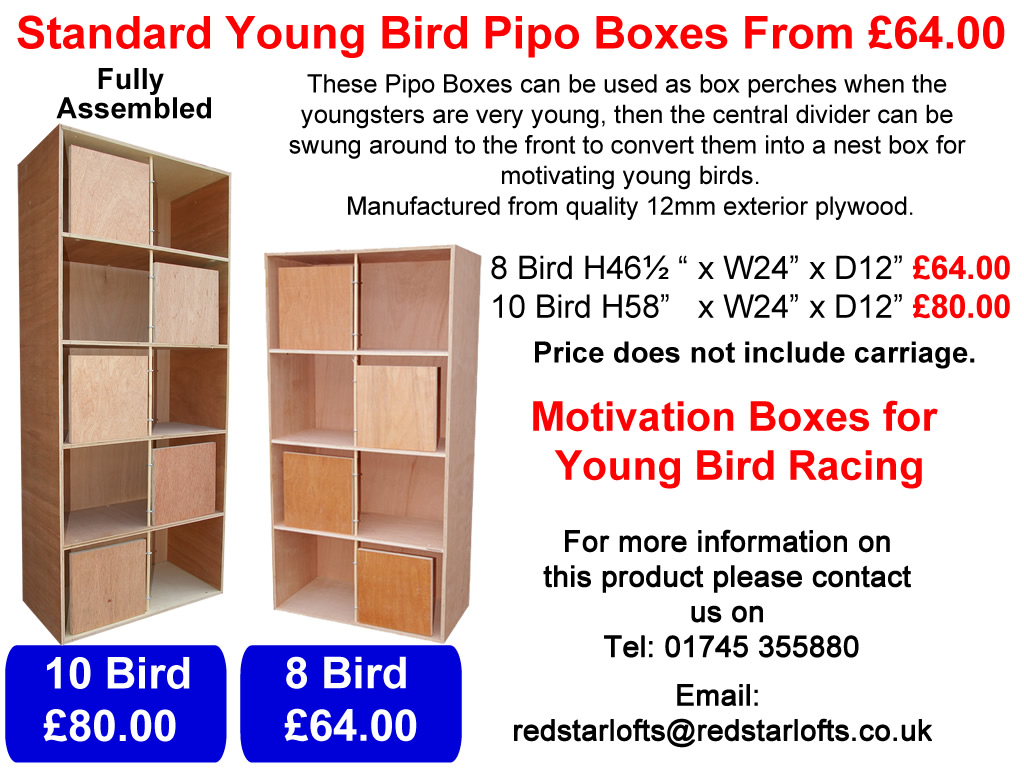 Standard Young Bird Pipo Boxes